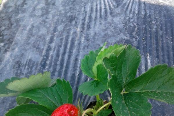 berries-kz440C8095-9615-AD16-E76E-CFA125149A09.jpg