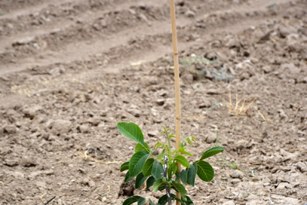 kz-walnut-gardens-zakladka-10C3CE56F8-1E9C-AE4F-355B-0BC6B39ED64E.jpg