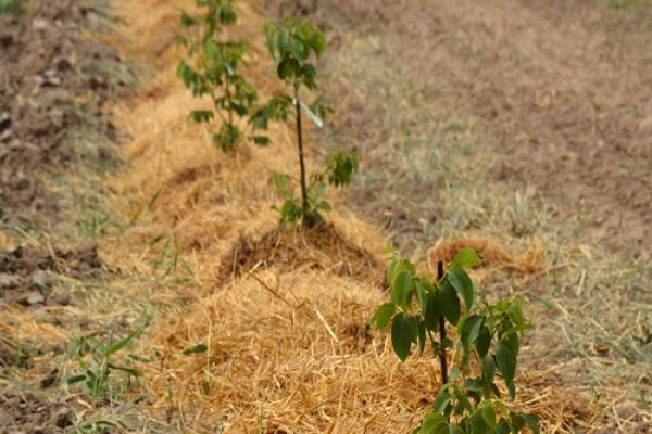 kz-walnut-gardens-zakladka-59E100F96-F987-B9F3-35B1-EDD73FEED8EB.jpg
