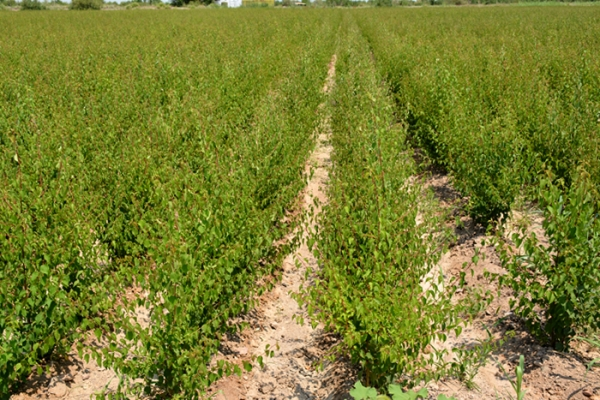 kz-walnut-gardens-zakladka-7ED17671B-C4CF-E939-55DD-9D3BB1EA933A.jpg