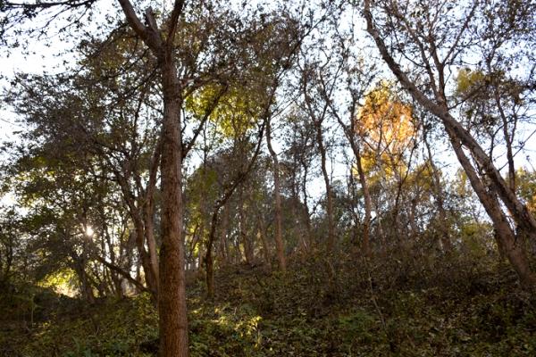 talgar-walnut-grove-3653A92AD-AF28-0063-89FB-499DDA2AD73D.jpg