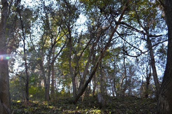 talgar-walnut-grove-4969F66A9-D9EE-91CB-DFAF-3C26C3DA1405.jpg