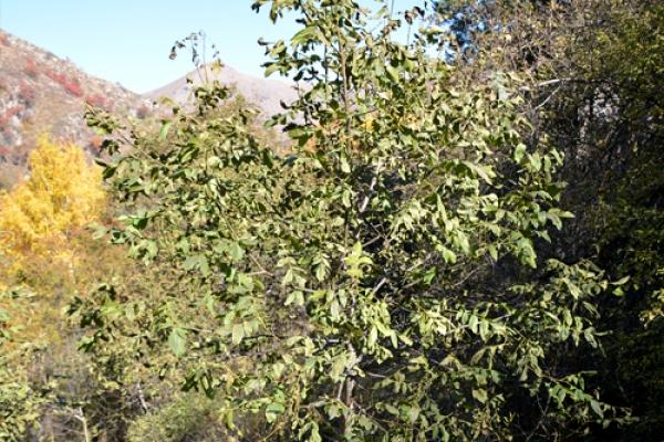 talgar-walnut-groveFEF043CB-B2BF-5EEE-5658-8E399F1A4A92.jpg